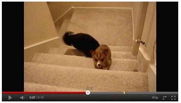 「俺が肩を貸してやるから行け!」素晴らしい連携で階段を上る犬