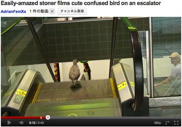 エスカレーターを利用する鳥さん、でも逆方向で前に進めない