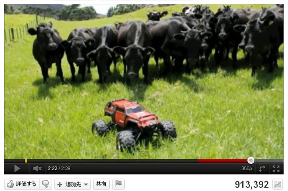 牧羊犬いらず? ラジコンカーを追いかけるキュートな牛さん