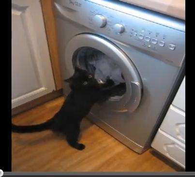 洗濯機の中で回転する洗濯ものと戦うネコがかわいすぎる!