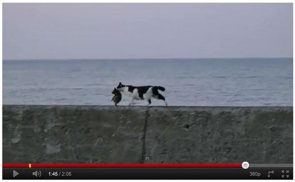 メッセージがいっぱい詰まったビデオ! 愛情あふれる猫の親子の動画がYouTubeで話題に