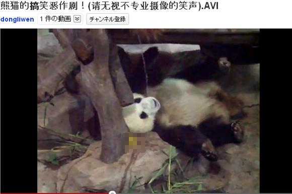 これはひどい! 寝ているパンダに糞尿をかけるいじめっ子(?)パンダ