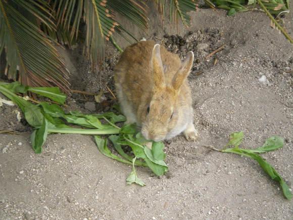 もふっ、ウサギだらけの楽園・広島県大久野島