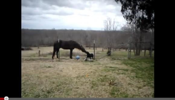 意外な2匹! 馬とワンコがじゃれあう動画が本当に癒されます