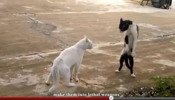 脅威の身体能力! 忍者ネコは実在した!?