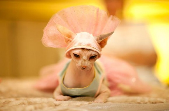 NYの老舗ホテル「アルゴンキン」の看板ネコちゃんたちによるファッションショーが開催されたよ!