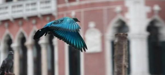 なんて鮮やかっ! ヴェネチアに出現した「鳩を染める」大胆アート