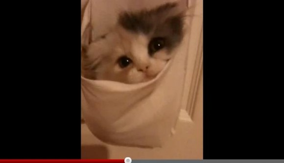 おや? 子ネコたんが妙なところにすっぽりハマっておるぞっ!