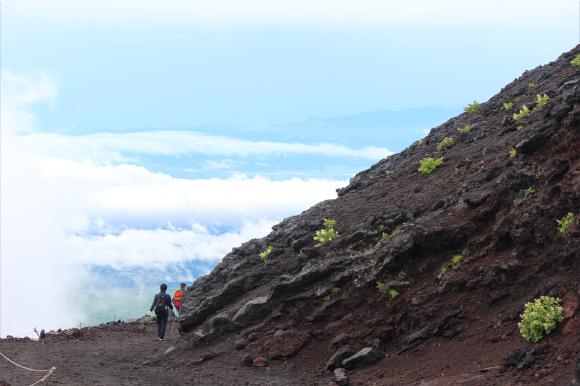 「富士山は岩だらけでツマラナイ」ってホント? いやいや富士山にだって植物は生えてるよ! 可愛い姿に癒されちゃいます
