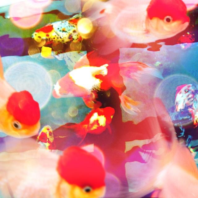 話題沸騰中! どんな写真も蜷川実花さん風にできちゃうiPhoneアプリ「cameran」を使ってみた! マジで蜷川ワールドになってスゲエ!!