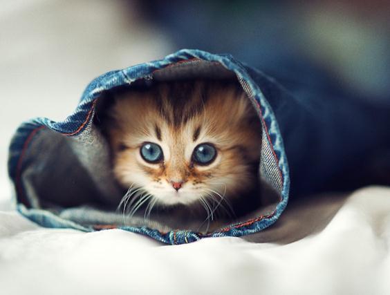 あどけない表情がたまらないっ! 世界一カワイイと評判のネコ「デイジー」