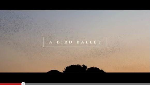 何千羽もの鳥たちが夕暮れの空でダンス! 自然の雄大さと美しさに心がじんわりと温まる動画