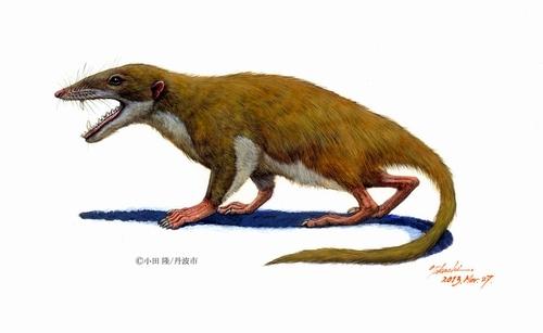 日本最古の哺乳類「カワイイ」がちっともかわいくないと話題に/「カワイイ?」「かわいくない」などの声
