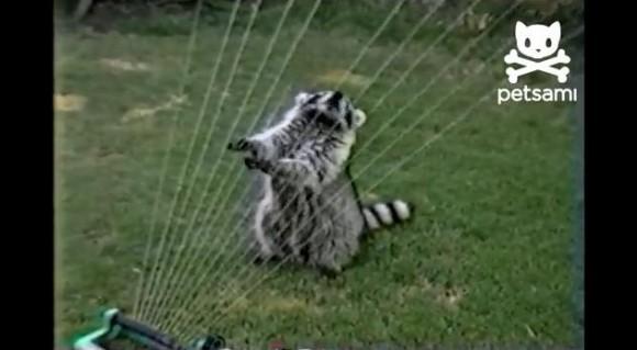 アライグマが奏でるハープの華麗な調べをどうぞお楽しみください