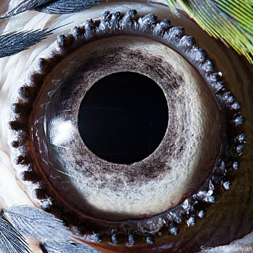 さまざまな生き物の目を超アップで撮影! どの目も小宇宙っぷりがハンパない