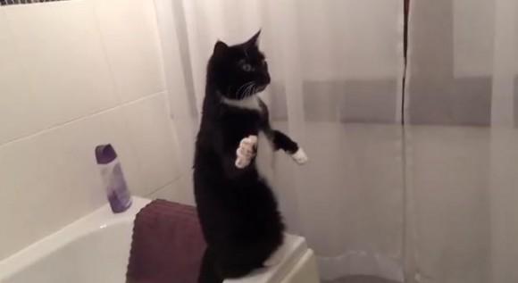 あそこにいるのは誰ニャ!? 鏡に映った自分を見て謎のポーズをキメまくるニャンコ