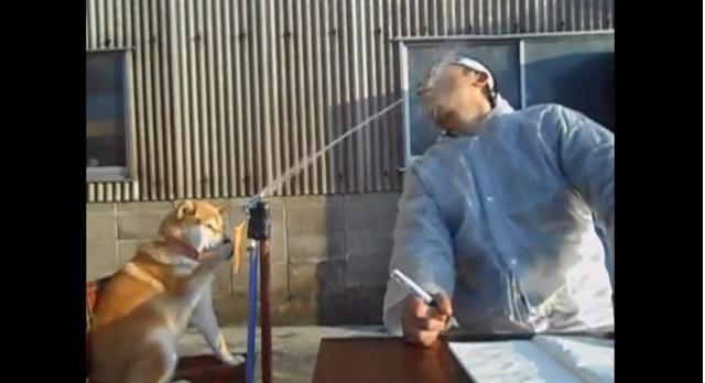 なんて息がピッタリなんだ! ネットで人気・ジワリとくる「柴犬マリ&男」のコント動画/飼い主にお話を伺ってみたよ!