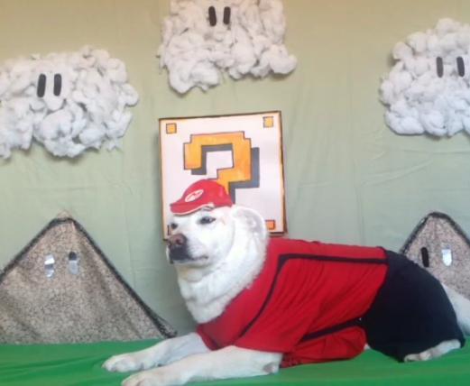ヤル気のないマリオ犬GIF画像が可愛すぎる! キノコでスーパーマリオに変身してもやっぱりヤル気なし