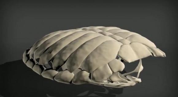 カメの甲羅ってこんな風に進化したの!? みるみるうちに肋骨が甲羅へと変化する様子を再現した動画