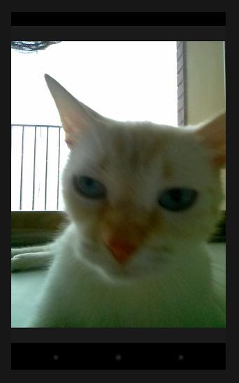 ニャンコ好きには辛抱ならんっ! ニャンコに自撮りを促すことができるかもしれないアプリ『Snapcat』