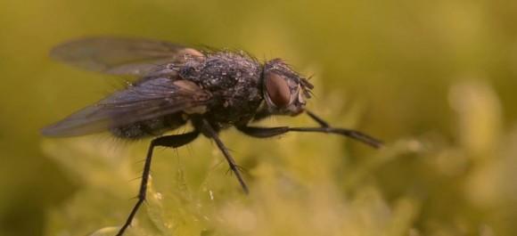 ええ〜っ! コレぜんぶ作り物の風景ってマジ!? イキイキと撮影された「昆虫写真」の背景
