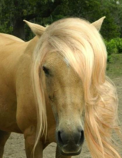 ドキッ…! キザな髪型をしたイケメン風の馬たち