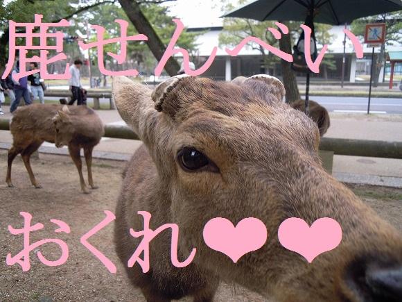 【奈良県民の常識】え、奈良公園の鹿がおじぎするってみんな知ってるよね? 海外サイトで「奈良公園の鹿が礼儀正しい」と話題