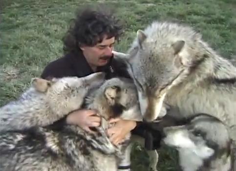まさにハーレム状態だけど…見ている方がハラハラ! オオカミに熱愛される男性