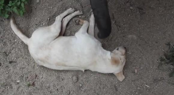 """長い鼻で """"寝ている犬"""" にちょっかい/好奇心旺盛な赤ちゃんゾウの奮闘ぶりにジワリ"""