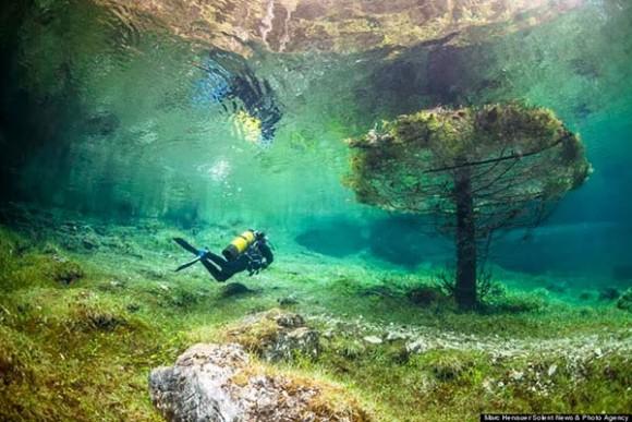 あなたも神秘の森林浴を満喫できる! 「森のなかを泳ぐ」映像の臨場感が素晴らしい!!