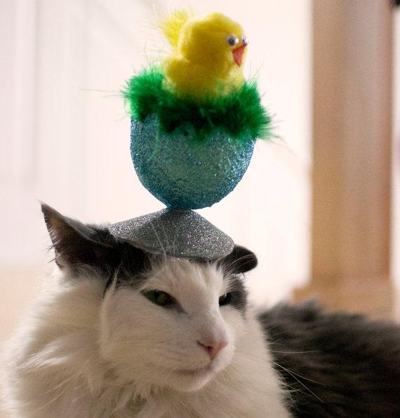 猫の飼い主さん必見! なんとも独創的なニャンコ用ヘッドドレス / ニャンコたちの少々迷惑そうな表情にも注目