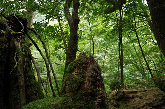 【閲覧注意】どう見ても人の顔! 屋久島の「白谷雲水峡(もののけの森)」で写真を撮ったら不思議な物体が写ってた!!