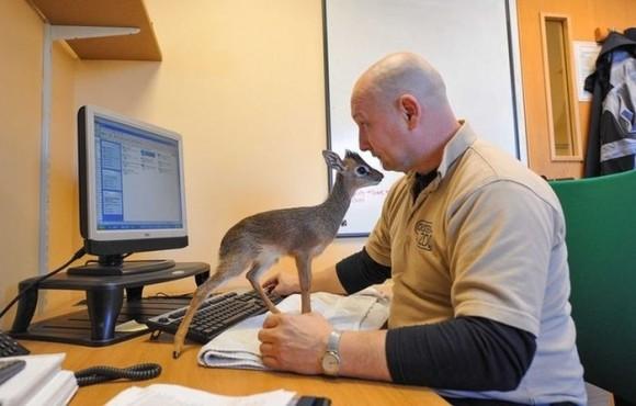 ふわあぁ、ぬいぐるみが動いてるみたい! 全長約20センチ「驚くほど小さなバンビ」アルナちゃんとネオくん