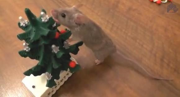 ネズミが懸命にクリスマスツリーの飾り付けをする動画