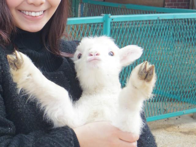 【体験レポ】本当に子羊は「バンザーイ」してくれるのか? 生後2週間の子羊を抱っこしたらこうなった