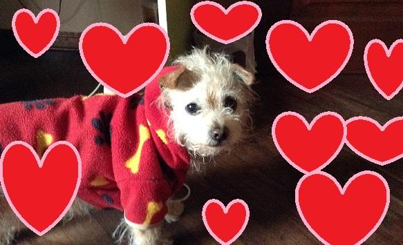 【飼い主必見】アナタの愛犬を守る! ワンちゃんと厳冬を過ごすための重要ポイント27カ条