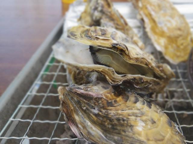【牡蠣好き必見】3月30日まで! プリップリの激ウマ牡蠣が食べ放題だってよぉぉぉー!