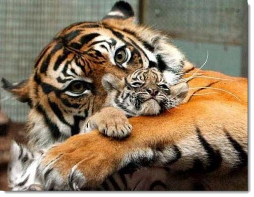 お母さぁぁぁーん! 美しき動物界の親子愛 / 今すぐママンに会いたい!