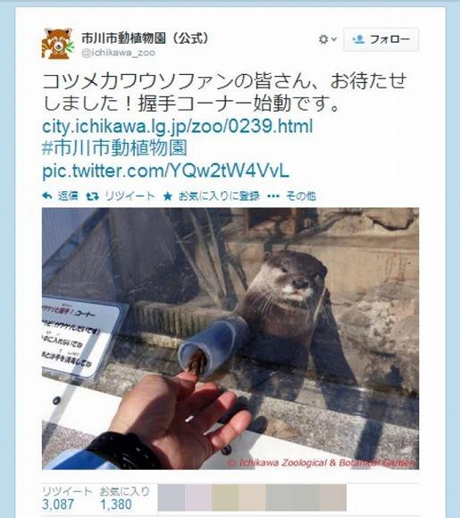 市川市動植物園にコツメカワウソの握手コーナーができたと話題 / Twitterユーザーの声「握手券は何についてるんです!?」