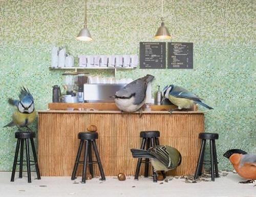 ミニチュアサイズのコーヒーショップを次々訪れる鳥さん&リスさんが超メルヘンチック!