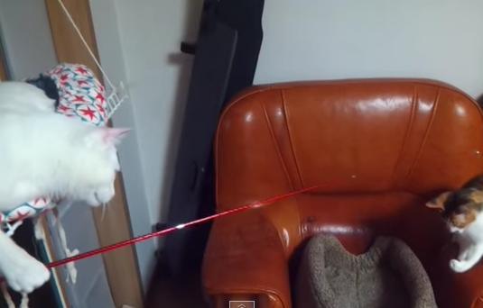 衝撃! ニャンコがニャンコを釣ろうと試みている動画を発見!!