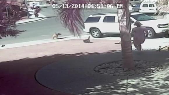【息をのむ動画】これは本当にスゴイ!! 犬に襲われている男の子をネコのタラちゃんが救出! 一部始終をご覧あれ