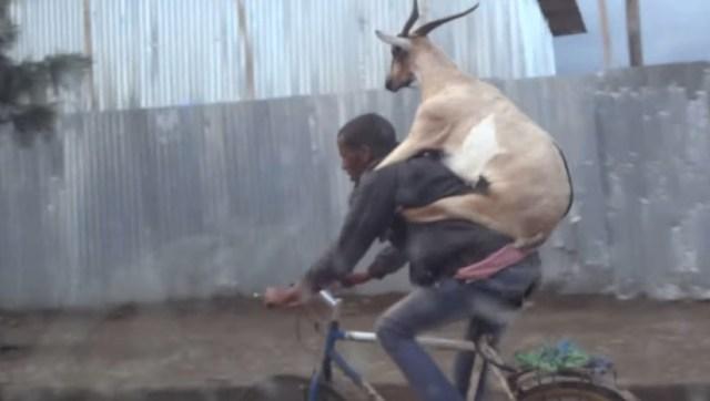 【本日の絶景動画】ドナドナド〜ナ〜ド〜ナ〜! ヤギをおんぶしながら自転車をシャカリキにこぐ男性