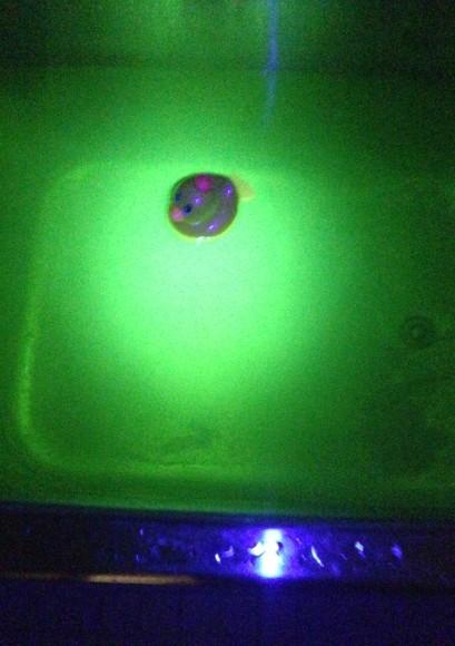 【やってみよう】「ビタミンB」でお風呂がまるでSFの舞台に!! 暗闇で蛍光イエローに光るサイケなお風呂が自宅で楽しめるよ!!