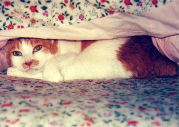 朝寝坊さん必見!「早起きを習慣づけるための7つのコツ」伝授しちゃいます〜っ☆