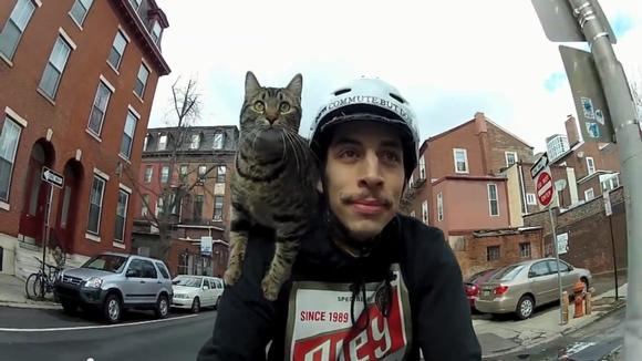 「風が気持ちいいのにゃ!」飼い主さんの肩にしがみついて街中サイクリングを楽しむにゃんこ