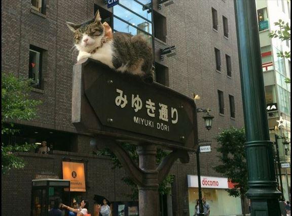 東京都内の有名スポットに突如現れくつろぐ猫! メッチャかわいいー!!!! ……でも実は、飼い主による虐待の可能性も!?