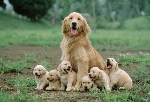 いや〜ん、キュート! ワンコ家族の集合写真がめちゃんこ愛らしくって、たまらんですたいッ☆
