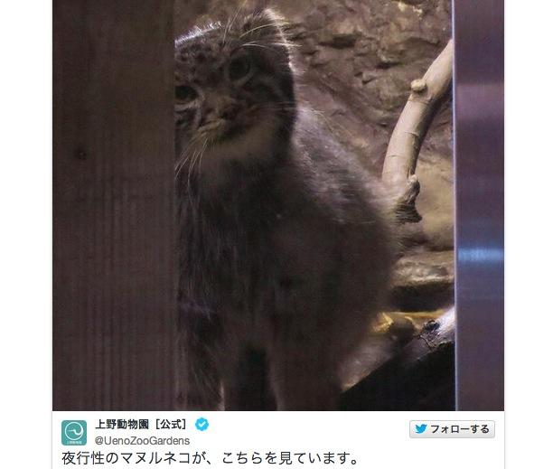 【8月17日まで】動物たちの夜の顔を観察できる! 上野動物園で開催中「真夏の夜の動物園」がめちゃんこ楽しそう!