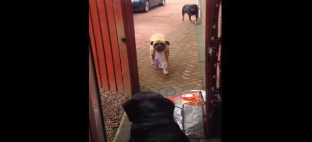 【胸キュン動画】イイ子いい子してあげたい…! 飼い主さんの荷物を健気に持ってあげる「お手伝い」ワンコたち